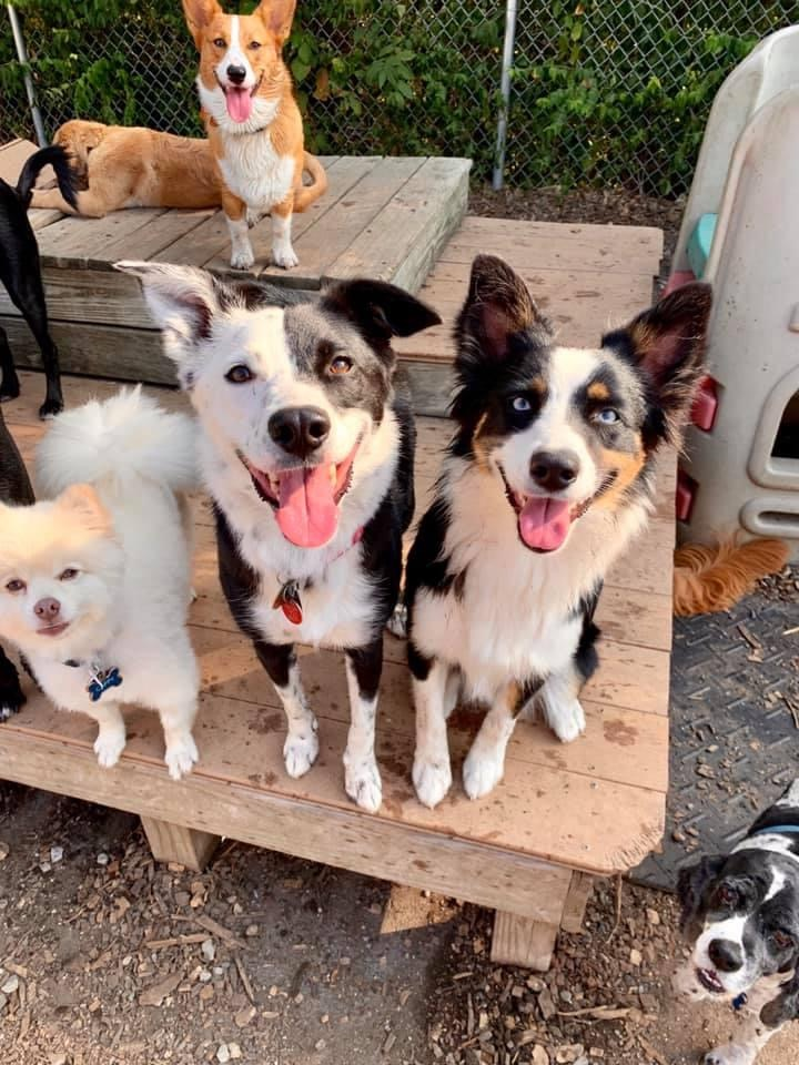 Dogs smiling at camera